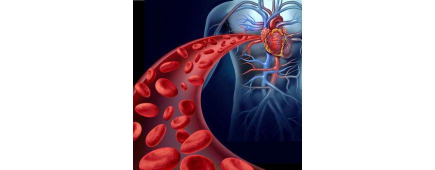 Santé CardioVasculaire / Circulation sanguine / Insuffisance veineuse de chez  CelluleFruitée - La Nutrition Colorée