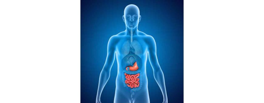 Digestion, Confort digestif, Transit de chez  CelluleFruitée - La Nutrition Colorée