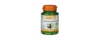 Harpagophytum - CelluleFruitée - La Nutrition Colorée